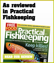 Pratical Fishkeeping Review